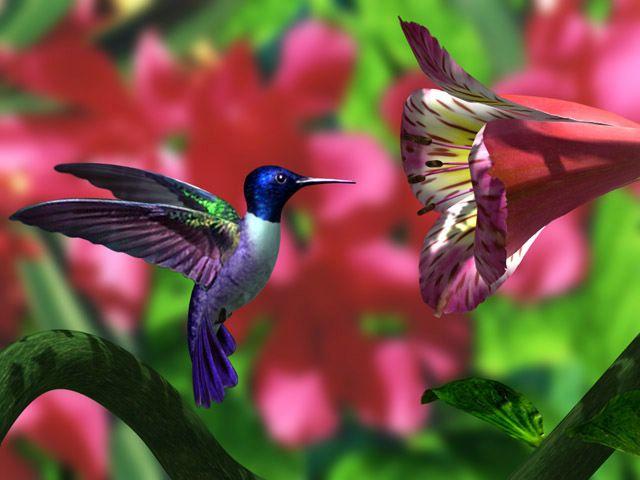 Colibri en 3D